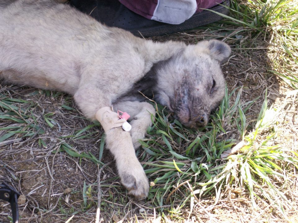 Food To Help With Distemper In Dogs