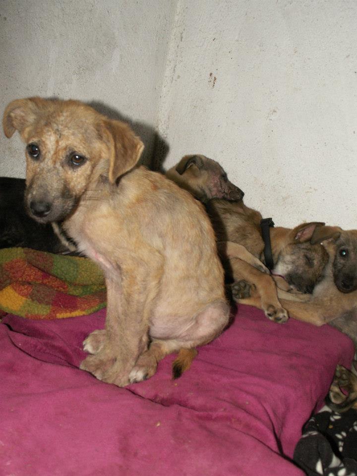 Canine Parvovirus Crisis In Memory Of Vučko