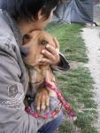 Ensar Dogs