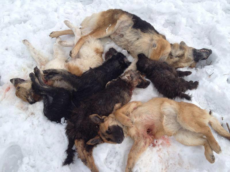 Gun Dog Puppy Food