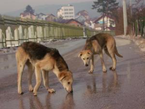 streetdogs