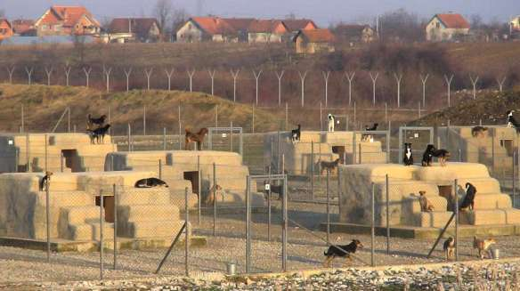 BAZIL dog shelter in Bosnia2