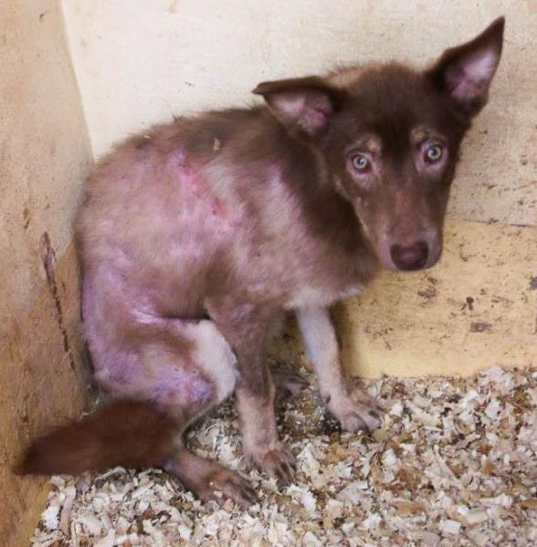 Four Rescued Dogs Need Help | IN MEMORY OF VUČKO