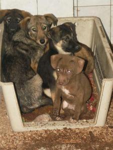 dogsinbox
