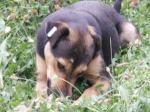 jelenasdogs_4