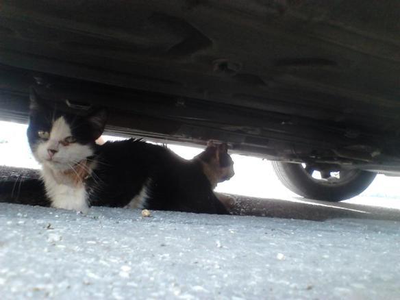 othercat