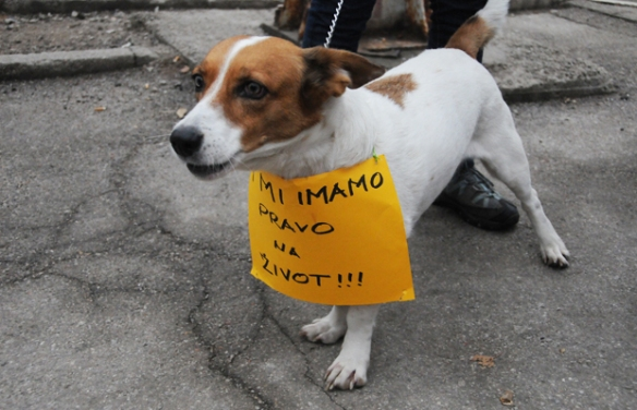U Sarajevu psi dnevno napadnu četiri čovjeka: Održani protest