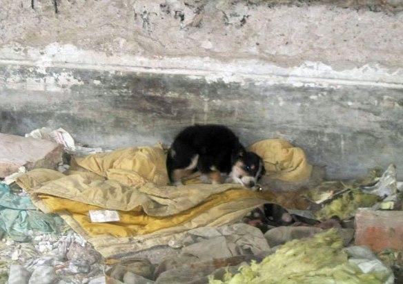puppyonblanket