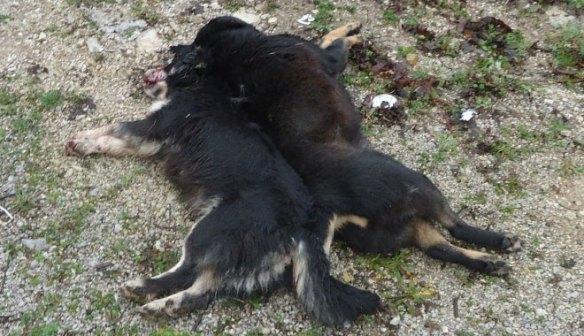 psi_ubijeni_2