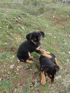 puppym4