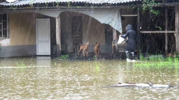 raindogs
