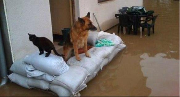 u-mostaru-prikupljanje-hrane--za-zivotinje-ugrozene-u-poplavama_1400666863
