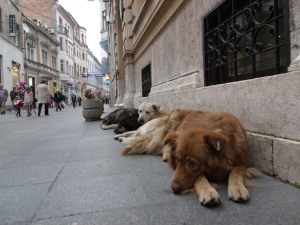 Dog Food Companies That Donate To Shelters