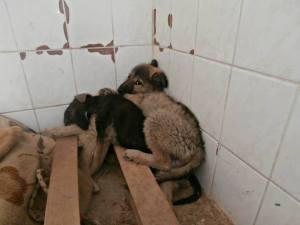 """Gladno Polje """"Shelter"""", Sarajevo, BiH"""