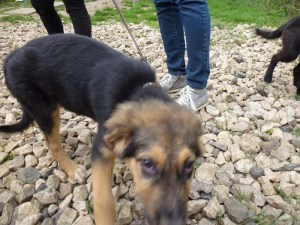 Recently rescued from the streets by SAPA Zenica volunteers